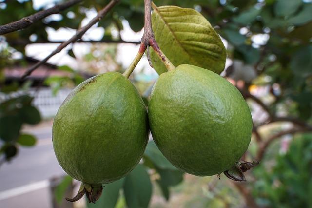 La guayaba, una fruta exótica baja en calorías