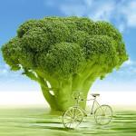 Brócoli, una verdura de invierno