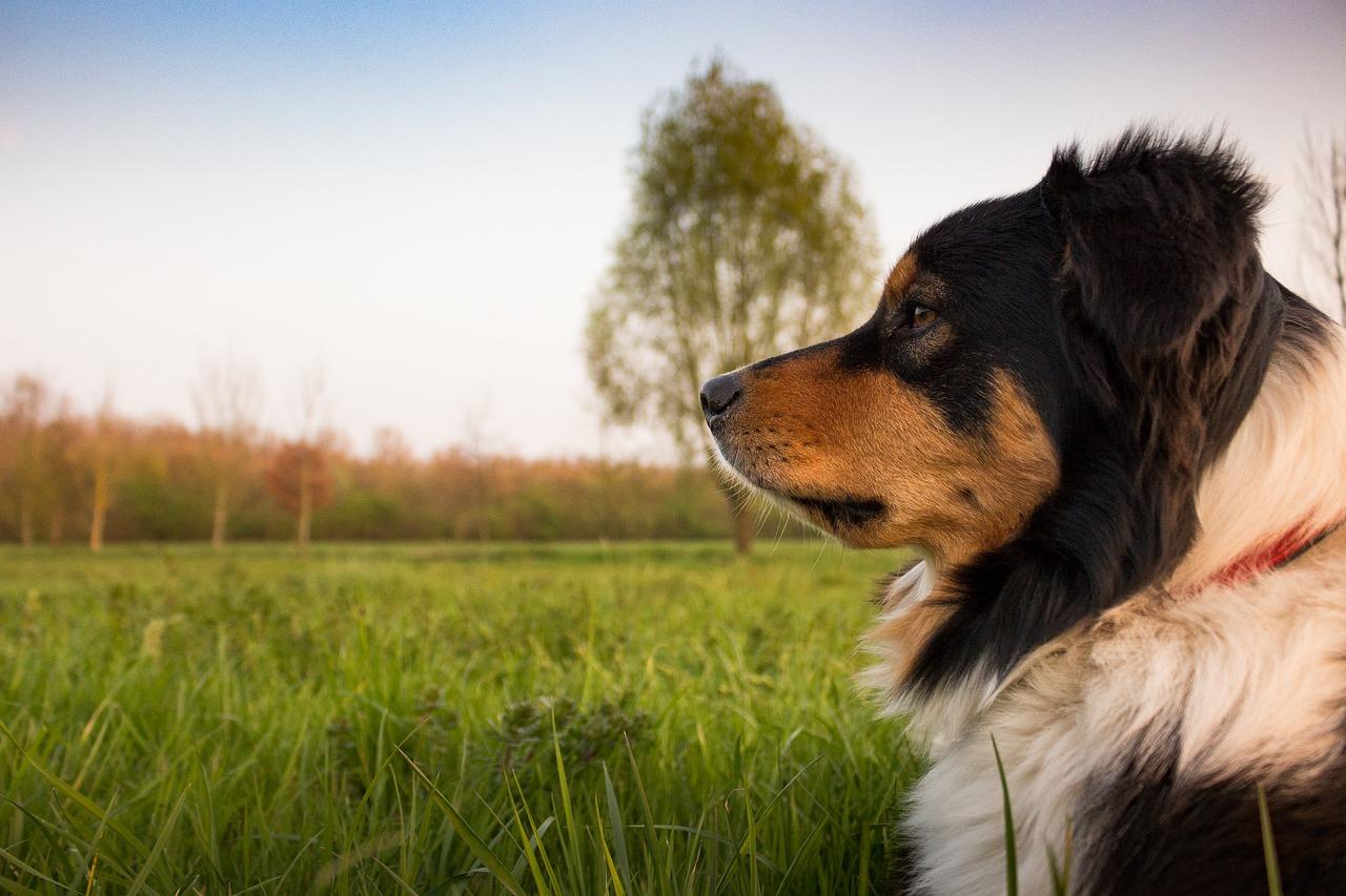 Perros de asistencia para la detección de hipoglucemias