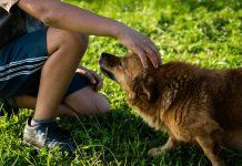 Perros de asistencia para personas con diabetes