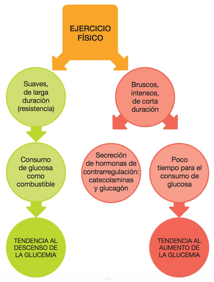 esquema patogénesis diabetes melitus